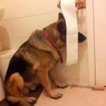Photo: Kutyák, akik nem túl jók a bújócskában