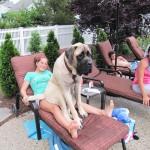 15 hatalmasra nőtt kutya, aki kiskutyának képzeli magát