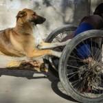Kutyája segít tolni a lebénult férfi kerekesszékét