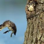 Récefiókák első szárnypróbálgatása [videó]
