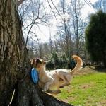 A világ legügyetlenebb kutyái [videó]
