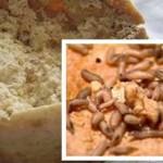 Casu marzu – a nyüves sajt