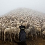 Photo: A világ legkeményebben dolgozó kutyái