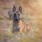 Hihetetlen barátság egy bagoly és egy kutya között