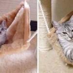 """Photo: """"Előtte-utána"""" fotók a macskák felcseperedéséről"""