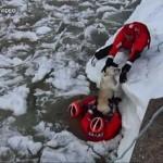 Jégtáblák közül mentettek ki egy kutyát a parti őrség tagjai