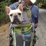 Kutyák, akik másképp értelmezik a túrázást