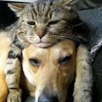 Macskák, akik párnaként használják a kutyákat