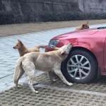 Társait hívta segítségül egy kóbor kutya, hogy bosszút álljon egy rugdosódó férfin
