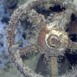Híres japán csatahajó roncsait találták meg a Sibuyan-tengerben 1000 méter mélyen