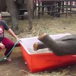 Photo: Így örült a fürdőnek egy thaiföldi kiselefánt