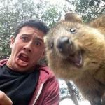 A legmókásabb fotóalanyok- találkozás a mindig vidám kurtafarkú kengurukkal