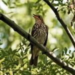 2 millió költöző madarat öltek meg az orvvadászok Cipruson