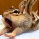 Egy mókusnak is nehéz az ébredés