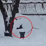 Photo: Ilyen egy részeg mókus - videó