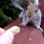 Vicces videó egy vívódó mókusról