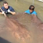 4 méteres óriásráját találtak Thaiföldön