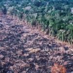 Öt németországnyi erdő tűnhet el