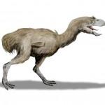 Egy gyilokmadár 3,5 millió éves csontváza került elő Argentínában