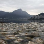 Elpusztult halak ezrei árasztották el a riói kajak-kenu versenyek helyszínét