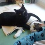 Photo: Ölelésével gyógyítja a beteg állatokat az ápoló cica