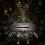 13 lenyűgöző fotó az óceán mélyéről