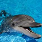15 hihetetlen és érdekes tény a delfinekről