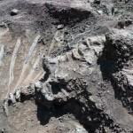 Hatalmas dinoszaurusz jó állapotú maradványaira bukkant egy kínai földműves