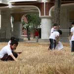 Egy iskola udvarán arattak búzát Kínában