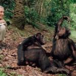Magyarországra látogatott Jane Goodall, a legendás csimpánzkutató