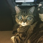 A legijesztőbb szemű macska