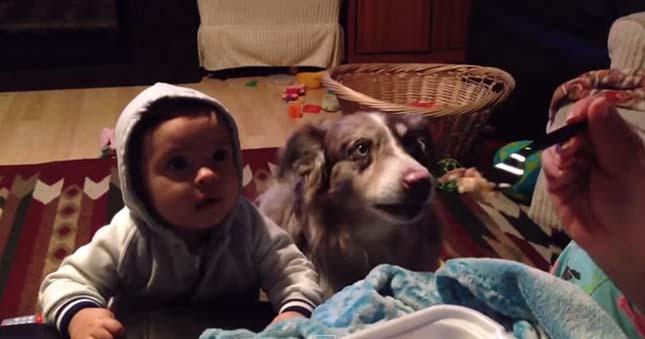 beszelo-kutya