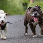 Örök barátság – mindent együtt csinál a vak kutya és hűséges társa