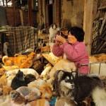 Száz kutyát mentett meg a biztos haláltól egy kínai nő
