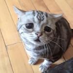 Luhu, a legszomorúbb tekintetű macska