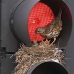 Szokatlan helyekre épült madárfészkek