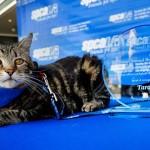 Egy bátor macskának adták az idei hős kutya díjat Amerikában