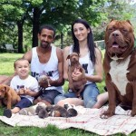 Photo: Kölykei születtek a világ legnagyobb pitbulljának, Hulk-nak