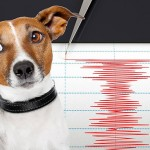 Hivatalosan is bevonják a földrengés-megfigyelésbe az állatokat Kínában