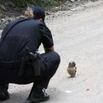Egy bagolyfióka tartóztatta fel a rendőröket