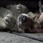 Megható videó: Egy beszorult, pánikba esett kutyust mentettek meg állatvédők
