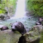 Fókabébik hada hűsöl egy vízesésnél