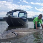 270 kilós fehér tokhalat fogott ki egy kilenc éves fiú