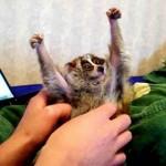 Photo: A csiklandozás kínzás egyes állatoknak