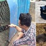 Photo: Kutyák helyett fekete medvéket nevelt tévedésből egy kínai gazda