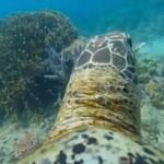 A gyönyörű Nagy-korallzátony egy teknős szemével