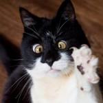 Ozzy, a kancsal macska