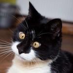 Photo: Ozzy, a kancsal macska