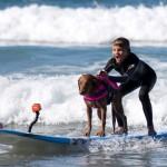 Terápiás kutya, aki szörfözve segít a legkülönfélébb betegségekben szevedőknek