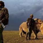 Egy év alatt 52 vadőrt öltek meg orvvadászok